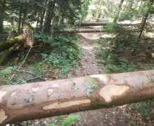 Sentier-semé-dembûches