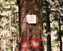 A vendre forêt d'Etat