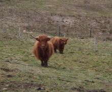 Les Highlands montent la garde