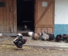 Accueil à la ferme1