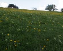 Teintes jaunes
