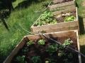 Salades en circuit (très) court