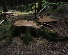 Ce fût un arbre