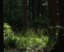 Roseaux en forêt