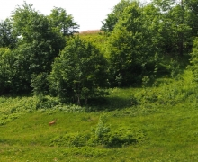 Chevreuil en fuite