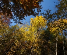 L\'automne s\'installe