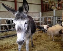 Le bel accueil des animaux de la ferme 2