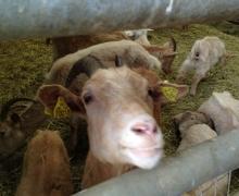 Le bel accueil des animaux de la ferme 3