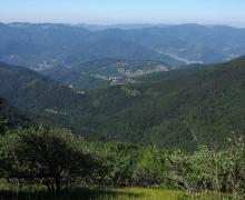 La vallée de Thann