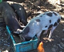 La vie à l'arrière de la ferme 1