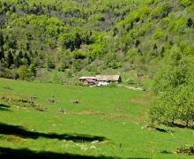 La ferme auberge du Hinteralfeld2
