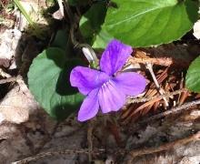 On avait envie de vous montrer une violette