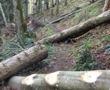 Sous les troncs, le sentier