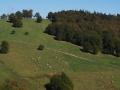 Les chaumes du Lochberg et quelques résidents