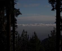 Ouverture - brume et forêt noire