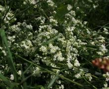 Flore printanière1