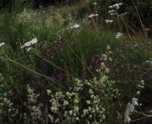 Nature florissante