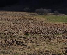Tourbière des Faignes de la Vologne5