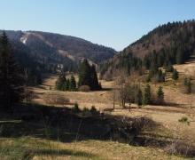 Vallée de tourbière