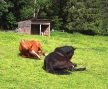 Les animaux du Col de la Charbonnière