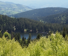 Le lac Vert ou de Soultzeren