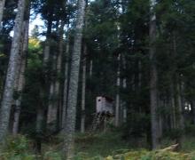Lucarne en forêt