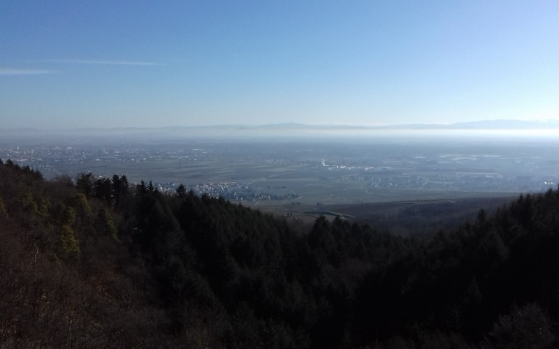 Vue du sommet -Wintzenheim, Ingersheim...