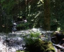 Neige ou lichen ?