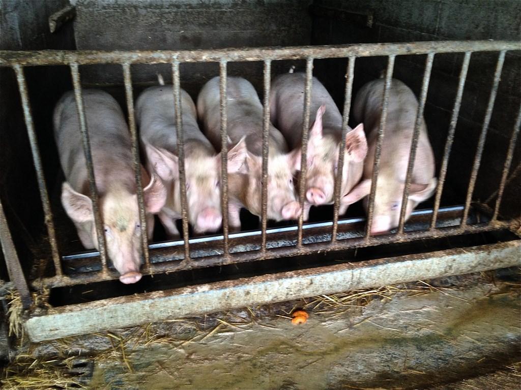 Le bel accueil des animaux de la ferme