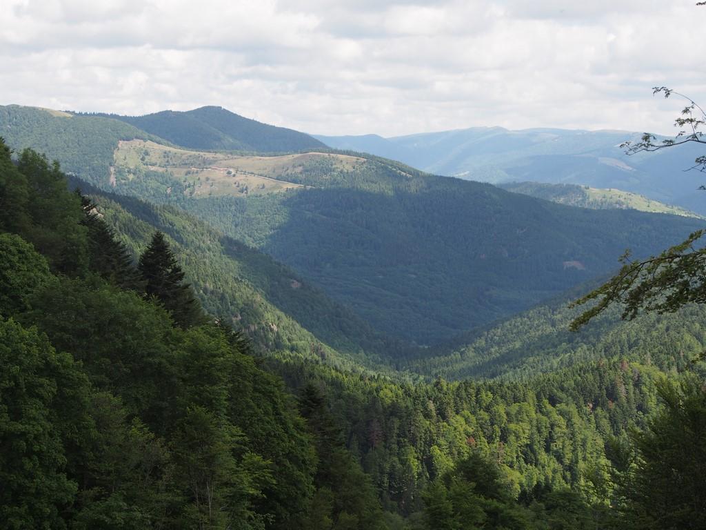Le vallon d'Urbès