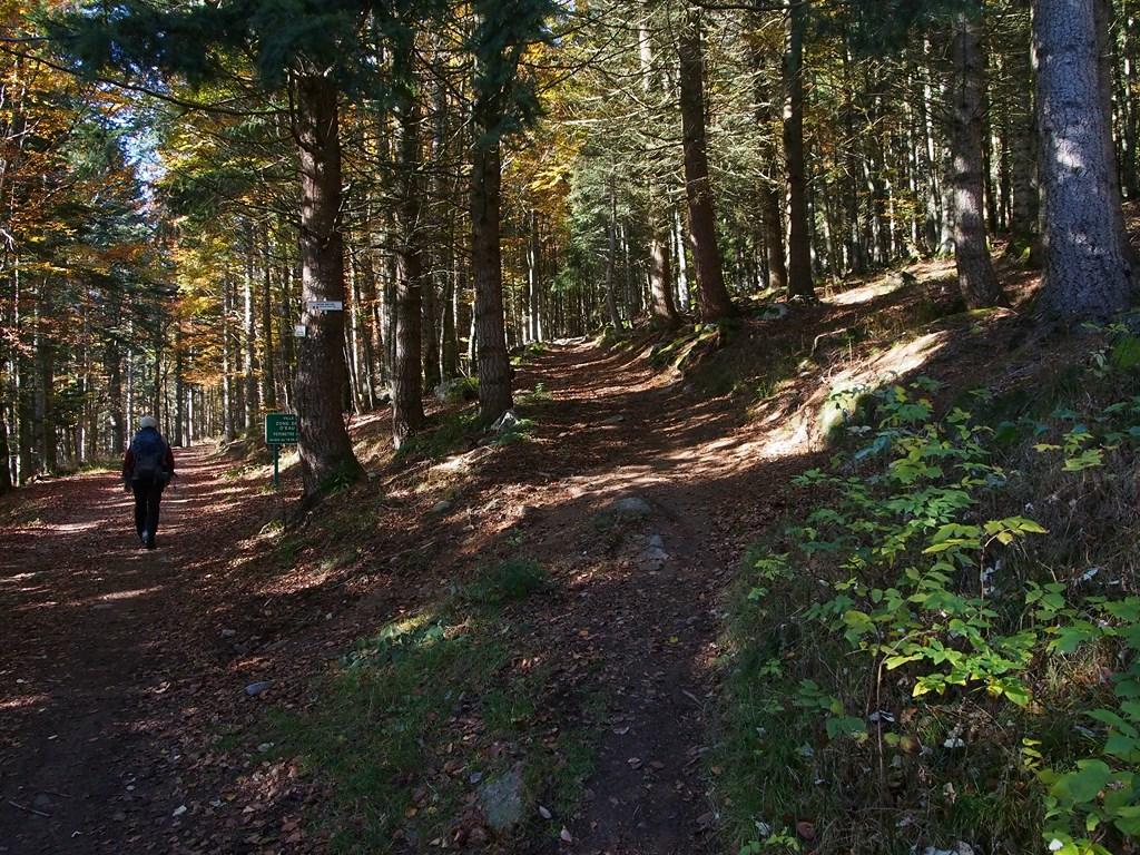 Sentier automnal au-dessus du Peternit