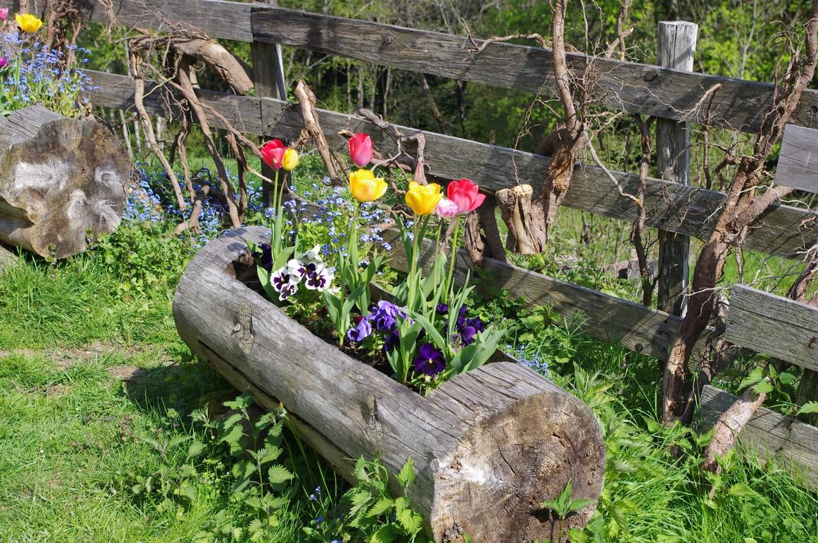 Bruckenwald fleurs