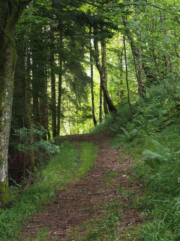 Sentier buccolique