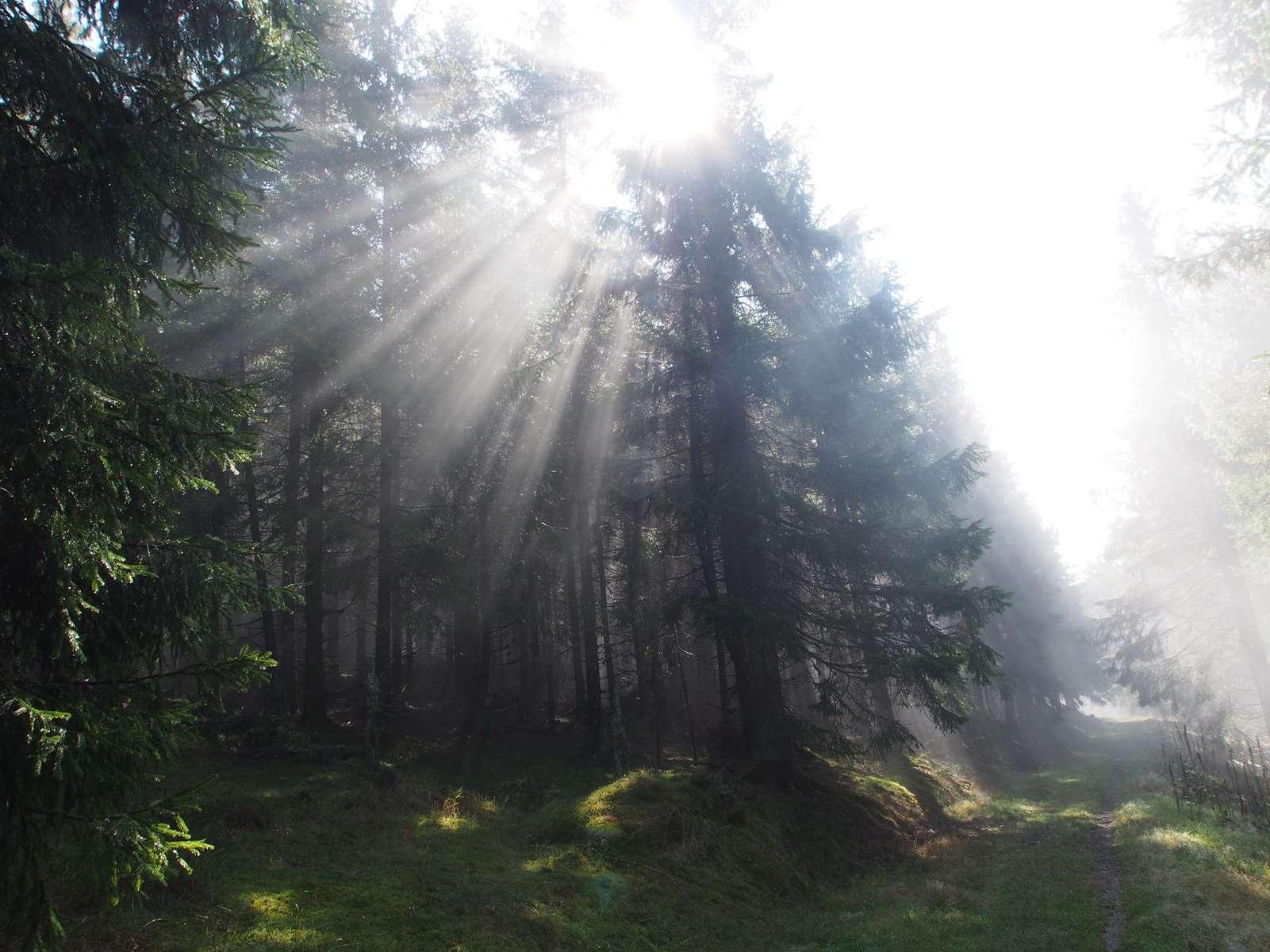 Forêt Kreuzweg