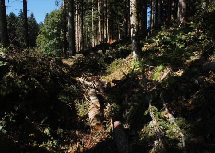 Travaux forestiers très anciens !
