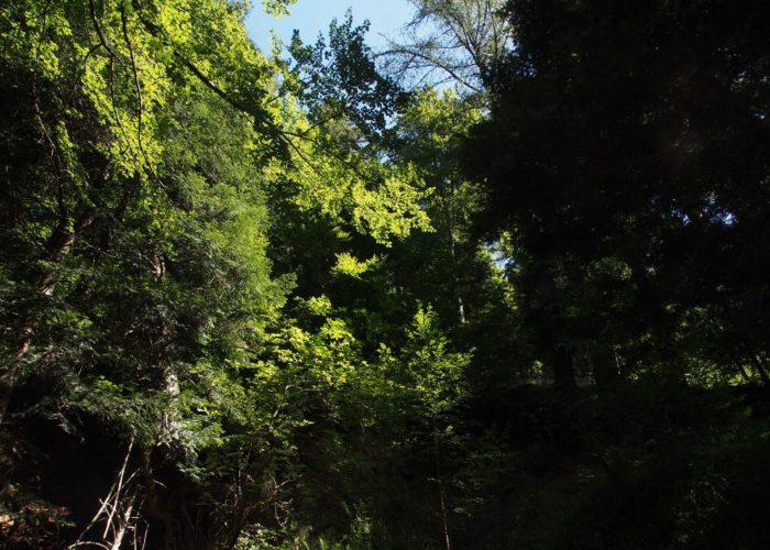 Riches et nobles forêts