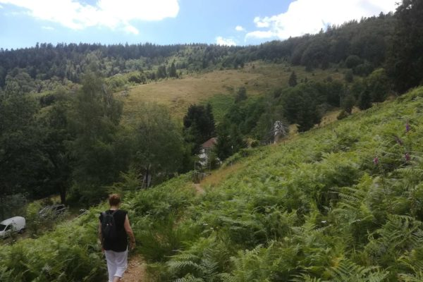 Arrivée au Bruckenwald