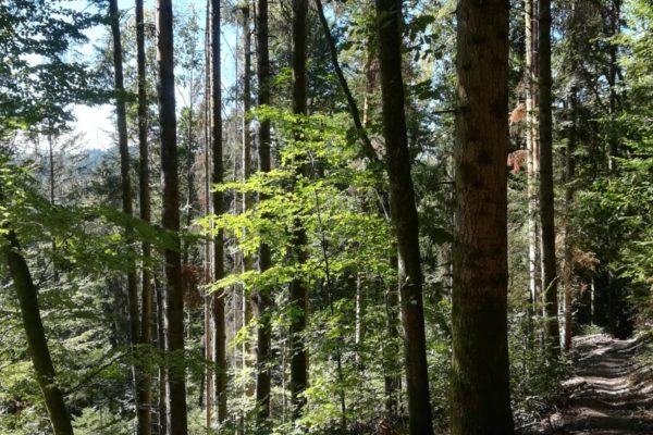 Belle forêt au dessus de Houppach