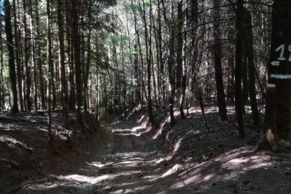 Belle forêt au dessus de Houppach2