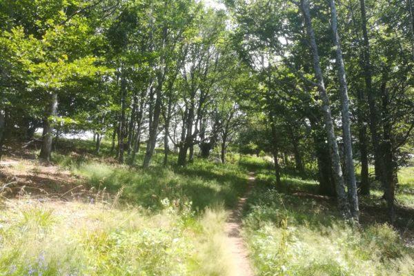 Sortie de la forêt