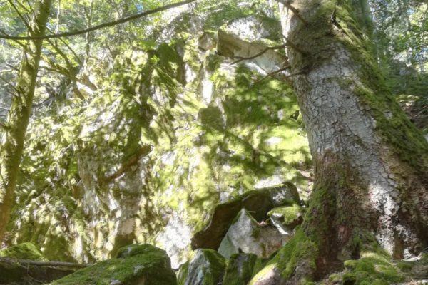 Paysages préhistoriques
