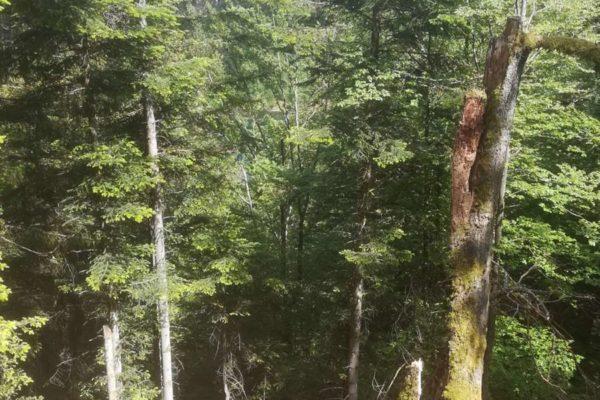 Gardien de la forêt