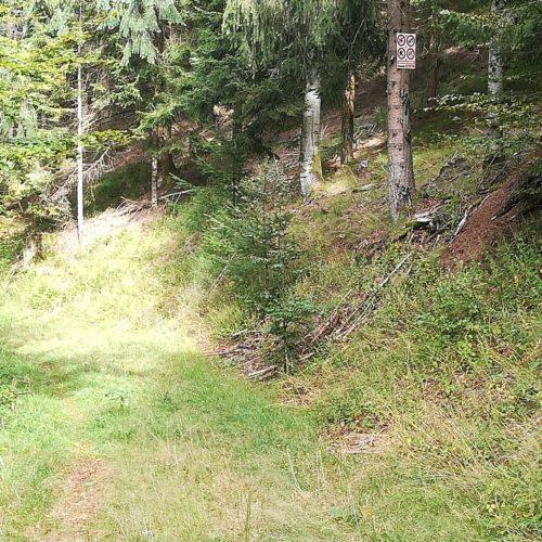 Interdictions en pleine forêt...